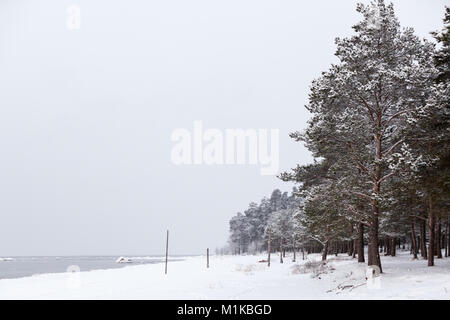 Snow-covered shore of the Gulf of Finland in the area of Sosnovy Bor, Leningrad Region, Russia - Stock Photo