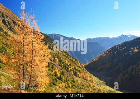 Colorful fall forest at a clear sunny day in  the Tyrolean Alps. Austria - Stock Photo