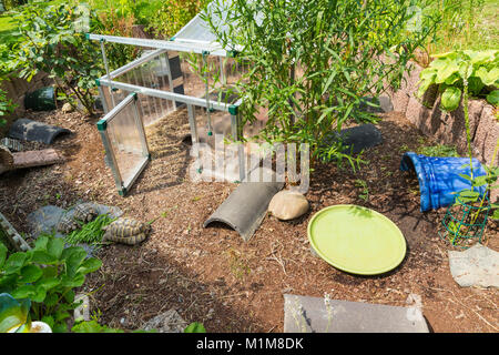 Mediterranean Spur-thighed Tortoise, Greek Tortoise (Testudo graeca) and Hermanns Tortoise (Testudo hermanni). Open - Stock Photo