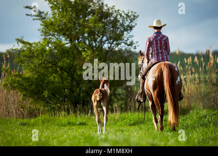Pintabian. Rider on mare accompanied by foal on a cross-country ride. Germany - Stock Photo