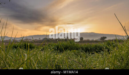 Dew in the field at dawn - Stock Photo