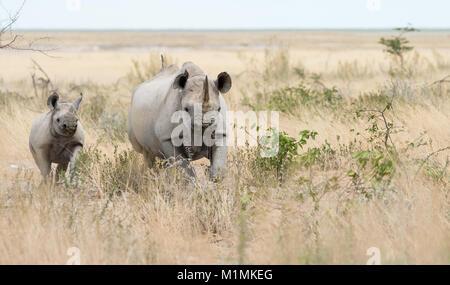 Rhino and her calf in the bush - Stock Photo