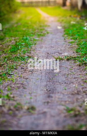 A small grass walkway and ground. Amidst the shady and beautiful nature in vertical view with flare light effect - Stock Photo