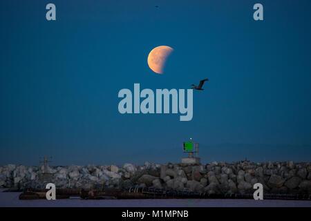 Super Blue Blood Moon during partial lunar eclipse. - Stock Photo