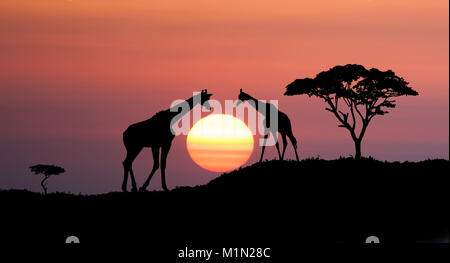 Giraffes and africans tree at sunset, abstract african illustration landscape with big sun over the horison - Stock Photo