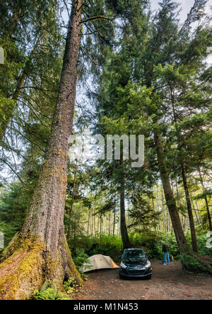 Douglas fir tree, temperate rain forest, camper at campsite at Quatse River Campground in Port Hardy, North Vancouver - Stock Photo