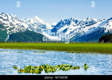 Lush marsh grass contrasts with the ice and snow of Skookum Glacier and the Chugach Mountains in Chugach National - Stock Photo