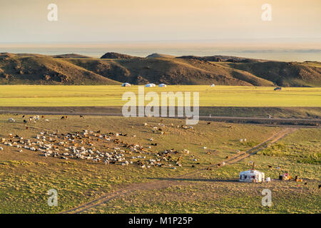 Nomadic camp and livestock, Bayandalai district, South Gobi province, Mongolia, Central Asia, Asia - Stock Photo