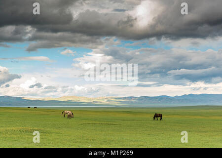 Horses grazing on the Mongolian steppe under a cloudy sky, South Hangay, Mongolia, Central Asia, Asia - Stock Photo