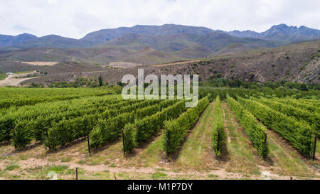 aerial image over a fruit orchard in south africa - Stock Photo