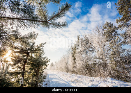 The road in the snow among the trees. Sunbeams in the branches of spruce. Landscape - Stock Photo