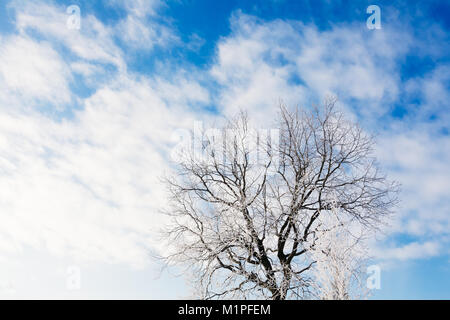 Oak tree without leaves in winter covered with frost against a blue sky with clouds - Stock Photo