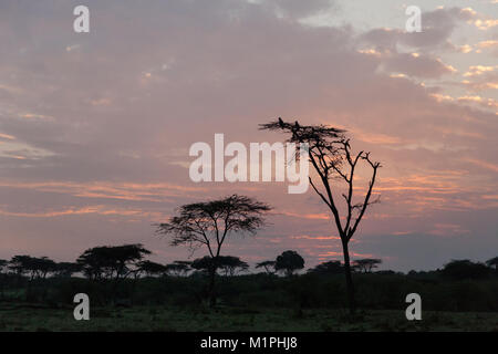 birds perched on the upper branches of a tree at - Stock Photo
