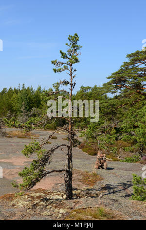 Pine in mountains. Geta, Aland Islands, Finland - Stock Photo