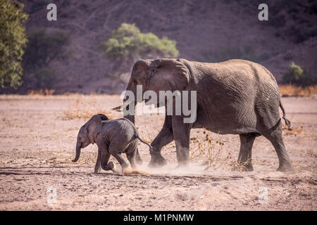 Mother elephant keeping her baby in line, following it around to make sure it is safe. - Stock Photo