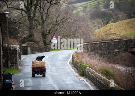 A Farmer and his sheepdog travel through Muker in The Yorkshire Dales National Park. - Stock Photo