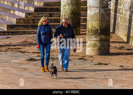 Dog walkers on Torquay seafront by the concrete sea defences and promenade along Torre Beach, Torquay, Torbay, Devon, - Stock Photo
