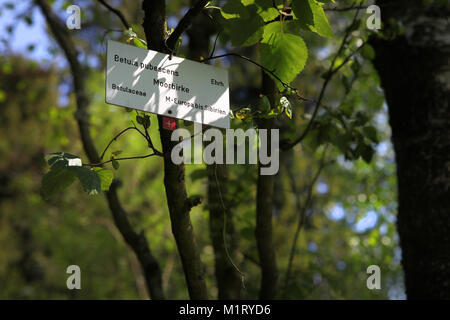 Taxonomy of trees - Stock Photo
