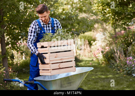 Gardener putting seedling in wheelbarrow - Stock Photo