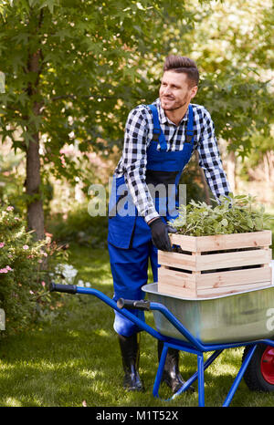 Gardener lifting wooden crate with seedling - Stock Photo