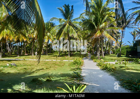 JOHNNY CAY, COLOMBIA - JANUARY 09, 2015: Some paths and space for relax surrounded by palms in Johnny Cay. - Stock Photo