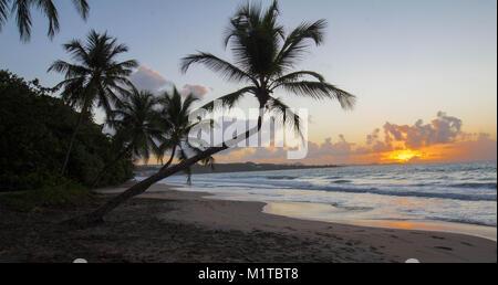 Sunset, paradise beach and palm tree, Martinique island. - Stock Photo