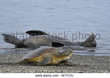 Fernandina Island, Galapagos Islands. - Stock Photo