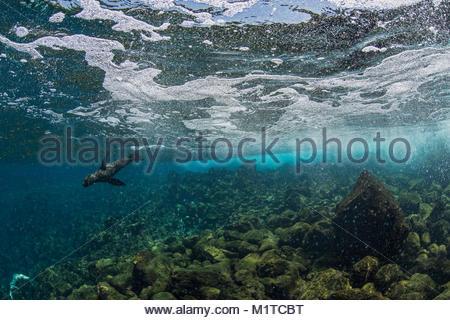 Isabela Island, Galapagos Islands. - Stock Photo