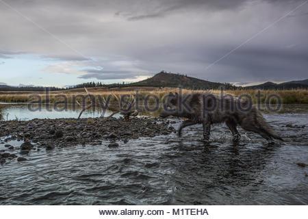 Yellowstone National Park, Wyoming. - Stock Photo