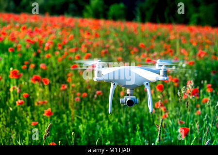 White quadrocopter, is flying high in the air, to take photos and record footage from above, in red poppy field. - Stock Photo