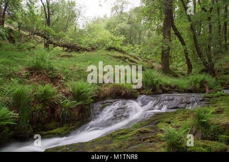 Stream running through Dartmoor at Venford brook,Devon, England. - Stock Photo