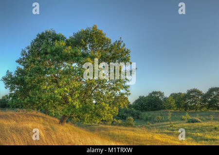 Beautiful lonely young oak tree growing in the field among the grass and small shrubs - Stock Photo
