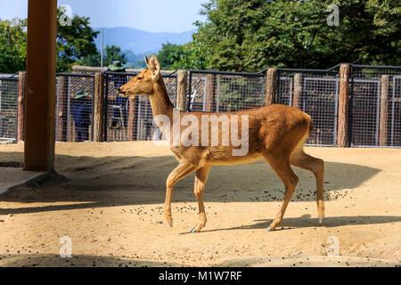 Animals in a zoo. various wild animals photo. 114 - Stock Photo