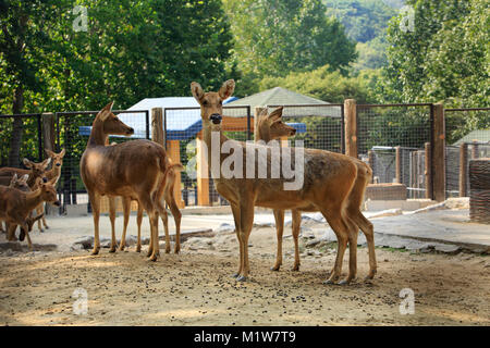 Animals in a zoo. various wild animals photo. 120 - Stock Photo