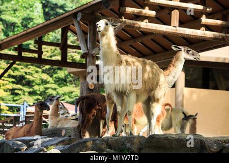 Animals in a zoo. various wild animals photo. 121 - Stock Photo
