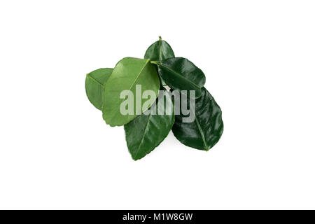 Lime Leaves on white background - Stock Photo