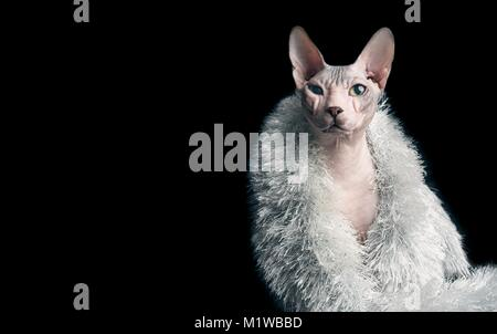 Funny portrait of a sphynx cat with silver stole - Stock Photo