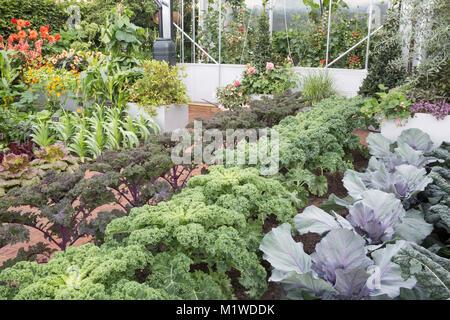 The BBC Radio 2 Chris Evans Taste Garden garden, from right to left: Cabbage 'Red Jewel, Kale 'Reflex' Kale 'Redbor', - Stock Photo
