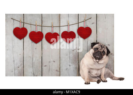 Cute pug puppy dog sitting down next to wooden fence of used scaffolding wood with red hearts, isolated on white - Stock Photo