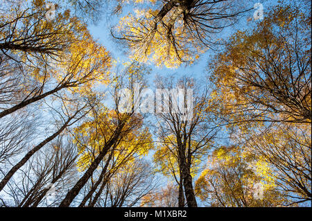The powerful energy of the woods in the autumn season. - Stock Photo
