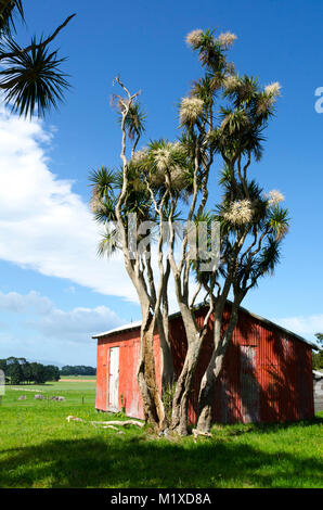 Red Barn and cabbage trees, Matarawa Road, Dalefield, Wairarapa, New Zealand - Stock Photo