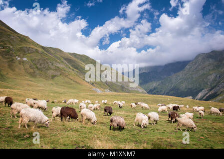 Herd of sheep grazing near Pourtalet pass, Ossau valley in the Pyrenees, France - Stock Photo