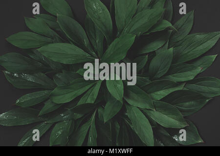 Creative layout made of green leaves on black background. Top view. Nature concept. Toned image. - Stock Photo