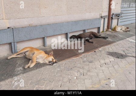 Dog sleeping, on a summer afternoon three dogs sleep under shade on a platform in Palermo train station, Sicily. - Stock Photo