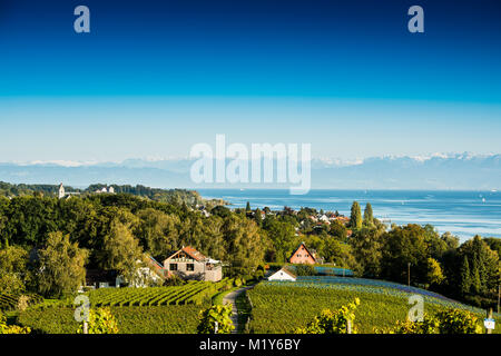 View of Lake Constance and vineyards, in the back the Swiss Alps, Hagnau, Baden-Württemberg, Germany - Stock Photo