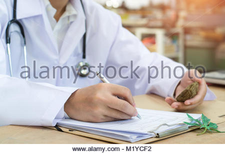 Female medicine doctor hand hold and offer to patient medical marijuana in jar. Cannabis recipe for personal use, - Stock Photo