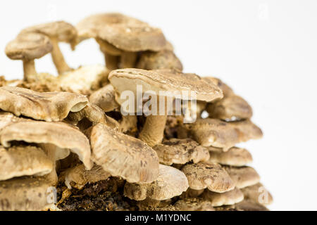 Close Up Of Mushroom Growing On Field In Forest Stock
