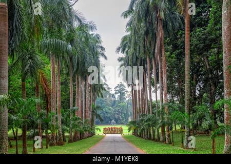 Royal Botanical Gardens, Peradeniya, Kandy, Central Province, Sri Lanka, Asia - Stock Photo