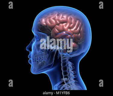 Human brain over black background. 3D illustration - Stock Photo