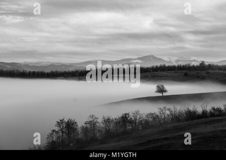 Beautiful landscape with lonely tree on small ridge that rises above a fog filled valley in rural Romania - Stock Photo